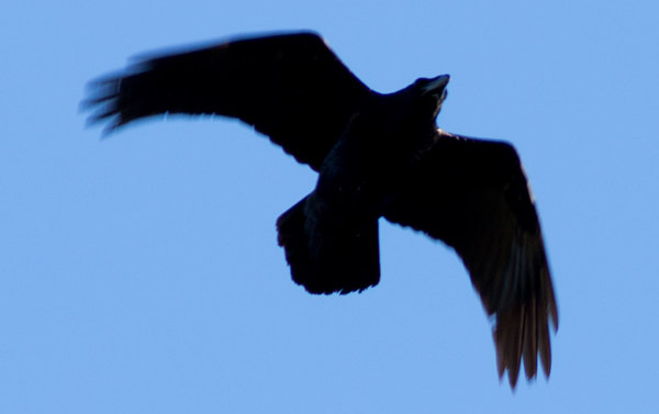 Ravensmall