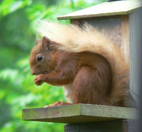 squirrelTT